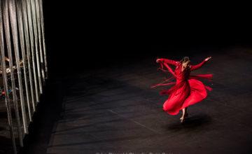 Flamenco Biënnale, Países Bajos, del 22 de enero al 7 de febrero